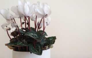 Оригинальные цветочные горшки — сделай сам! (Изображение)