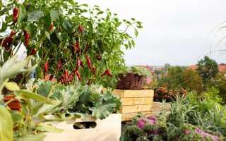 Выращивание овощей, трав и фруктов на балконе — первые шаги