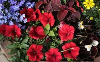 Цветы на балконе и террасе — как подготовить их к летнему сезону