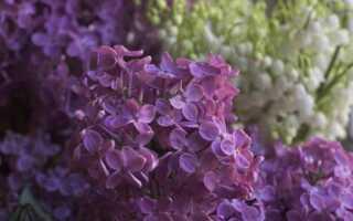 Ароматные скидки на террасе и в саду