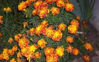 Осень в саду. Какие растения придадут саду цвет