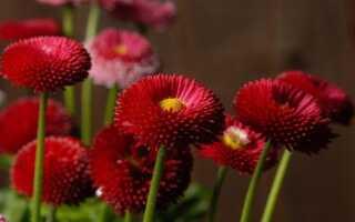 Удобрение садовых растений