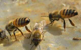 Гнездо пчел в домашних условиях: что с ним делать