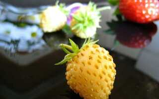 Разноцветная клубника и земляника. Как вырастить их в саду и на балконе
