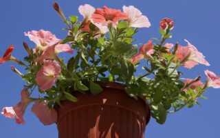 Субстраты для выращивания растений в контейнерах и аксессуары. руководство
