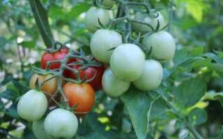 Как увеличить урожай томатов, перца, моркови и картофеля. руководство