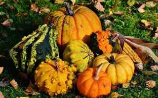 Тыква, тыква, кабачок, патон — тыква на осень