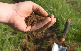 Земля в саду — виды и свойства почв