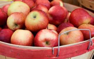 Желе с яблочно-мятой