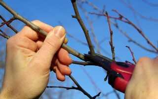 Весенняя обрезка плодовых деревьев и кустарников. Что, как и когда подрезать