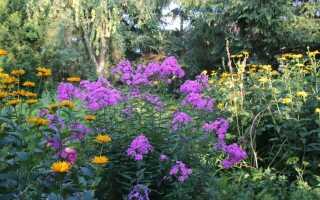 Загородный сад — узнайте, как украсить деревенский сад