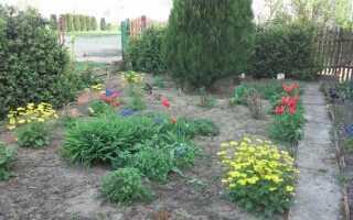 Многолетние цветы цветут в мае — как вырастить их, чтобы они были красивыми и здоровыми