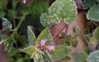 Как защитить садовые растения от майских морозов. Внимание к «холодной Zośka» и «холодным садовникам»