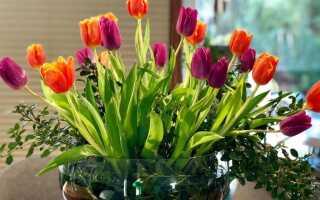 Тюльпаны — на женский день и не только. Что нужно сделать, чтобы сделать их последними [ФОТО]