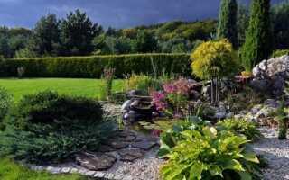Выращивание и уход за многолетними растениями