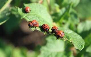 Как распознать присутствие некоторых вредителей в саду и зелени