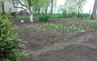 Работа в саду в мае