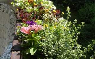 Балконные растения — уход и удобрение